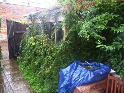 shed and garden before